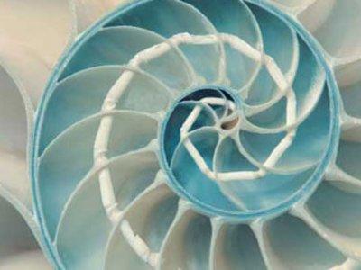 epsilon-seashell